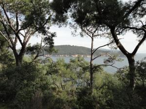 The view of Heybeliada through some of Burgazada's unburnt trees