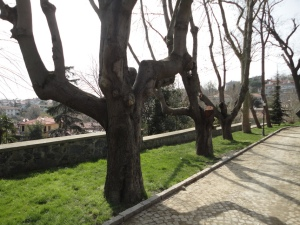 Emirgan Korusu, 2016.03.12