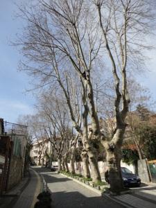 Emirgan Mektebi Sokağı, 2016.03.12