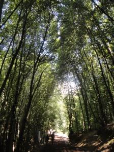 Polonezköy trail, 2016.08.14