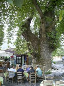 Ancient plane tree of Bayır, Marmaris Peninsula, September 9, 2010
