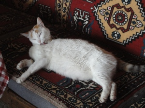 White cat licks herself on cushion