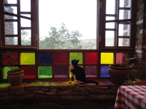 Cat at colored window