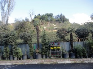 Potted palms with plaster farm animals on hillside behind