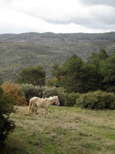Horse tied up in clearing, Şirince, January, 2018
