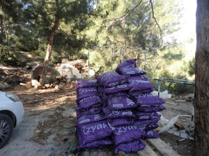 Purple sacks of coal beneath pine trees, Şirince, January, 2018