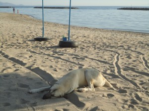 Dog sleeping on the beach
