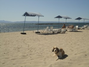 Dog on beach, glaring at you