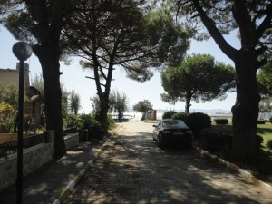 Road to beach, shaded by pines