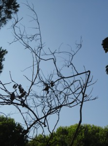 Branches against sky