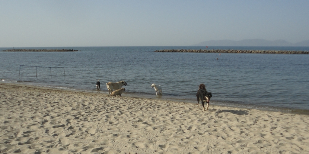 Five dogs at the edge of the sea
